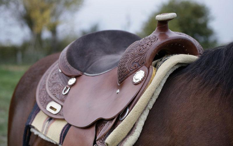 Stal Zwartschaap Sadle Horse